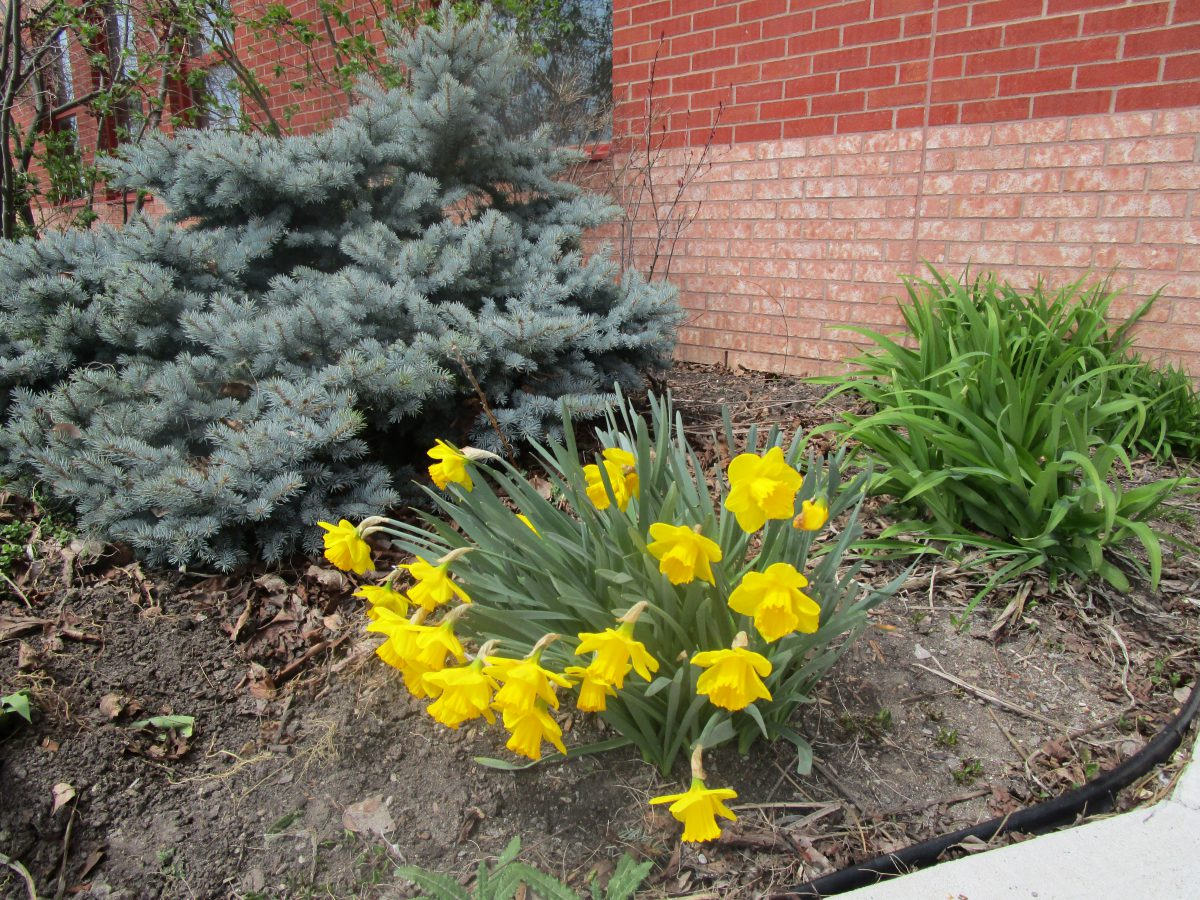 Planting for Spring